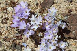 wild flowers1