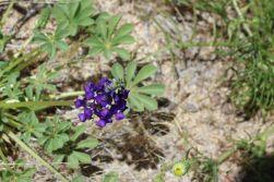 wild flowers4