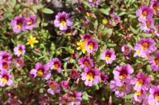 wild flowers5
