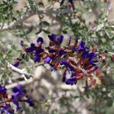 wild flowers6