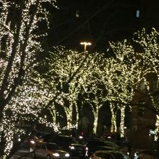 NY lights in Trees