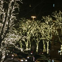 NY lights in Trees